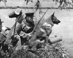 Бессмертная атака людей и собак