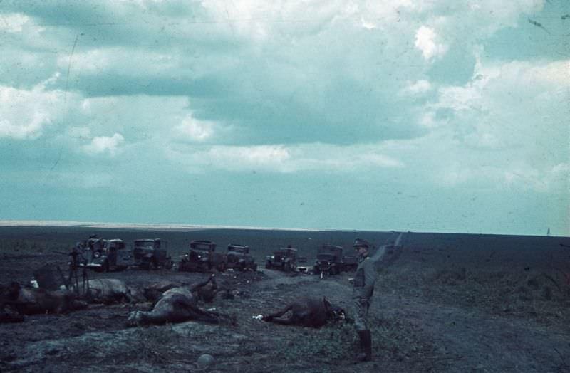 Уничтоженная немецкой авиацией советская автоколонна