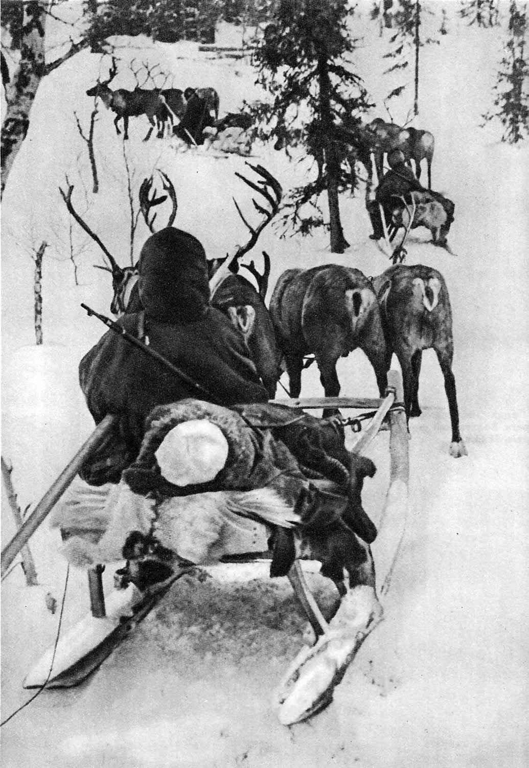 Карельский фронт: эвакуация советского раненого на оленях